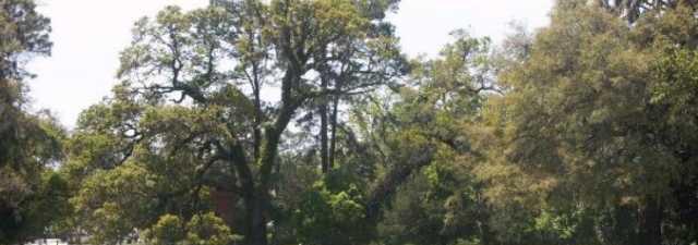 Jekyll Island GC - Oleander: #16